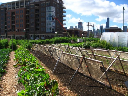 Chicago. Urban farming.