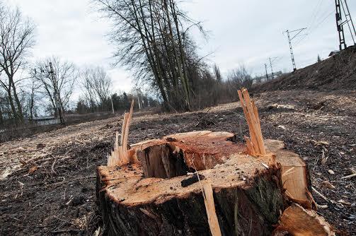 W zgniłej zachodniej Europie zieleń sadzi się na dachach czy wiaduktach. U nas usuwa się ją nawet z ziemi. Dlatego Kraków wzorem do naśladowania. Fot. Jakub Włodek.