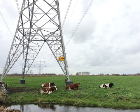 krowy kable flickr
