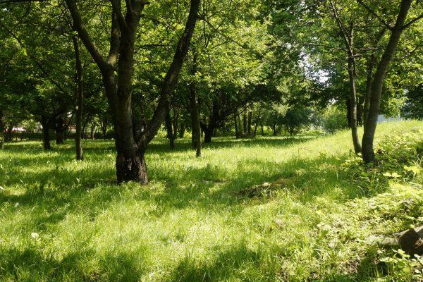 Bronowice Park
