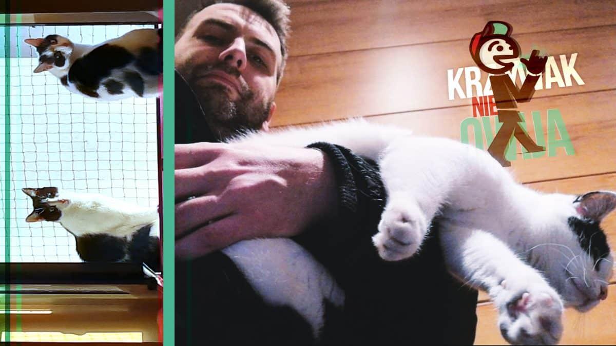 Adopcja kota psa Kraków.