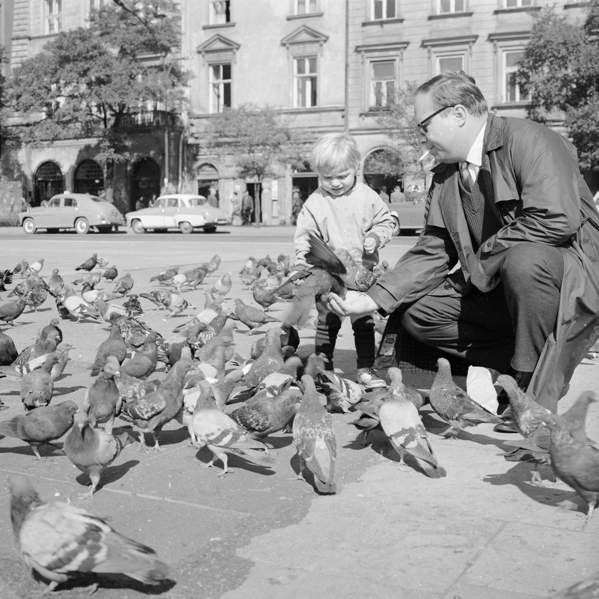Gołębie w Krakowie, Rynek Główny lata 60. XX wieku
