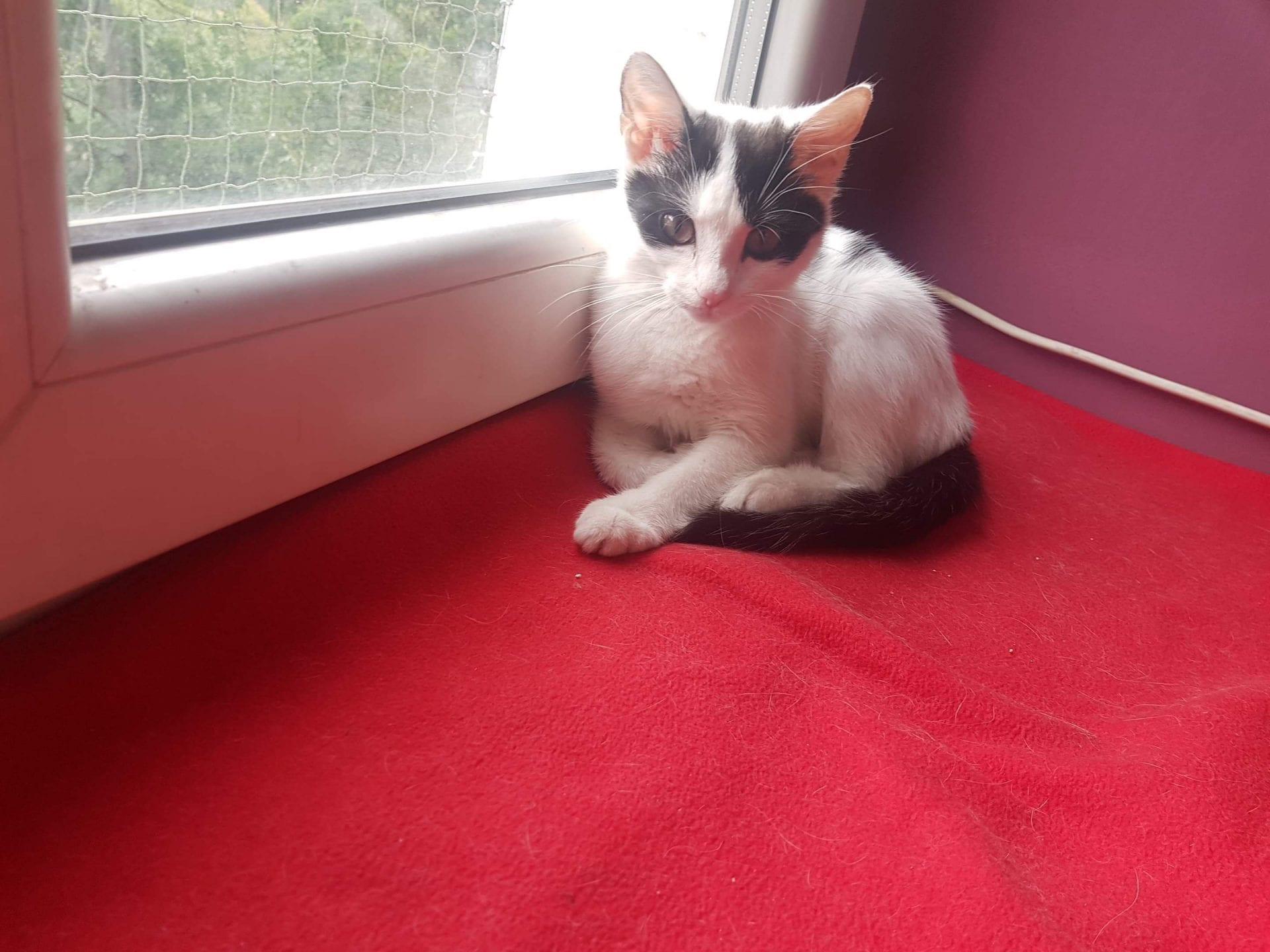 Adopcja kota psa kraków kot po adopcji