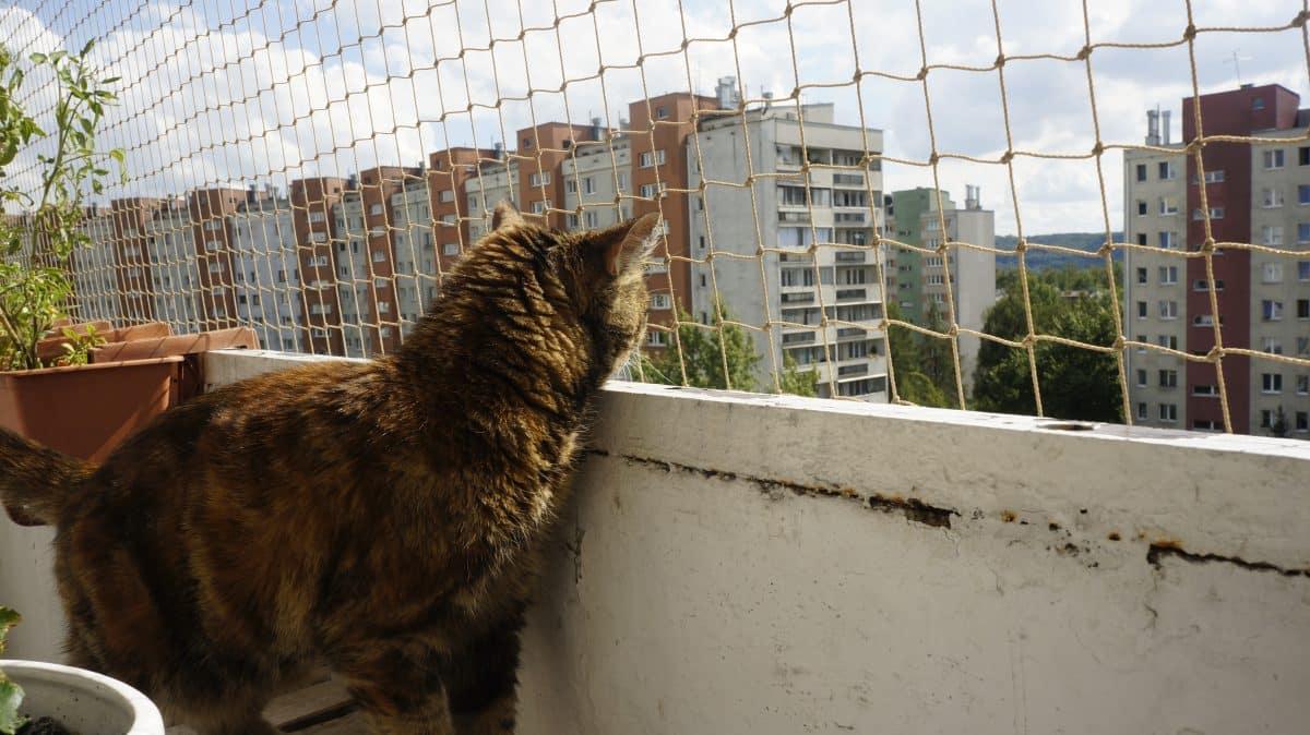 Koty Nieloty Siatki dla kotów Kraków
