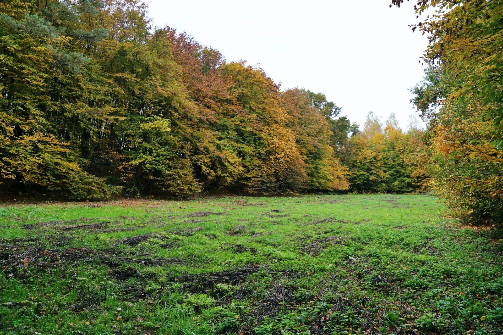 Na terenie parku krajobrazowego przy ul. Stępice ma powstać izolatorium składające się z 11 budynków.