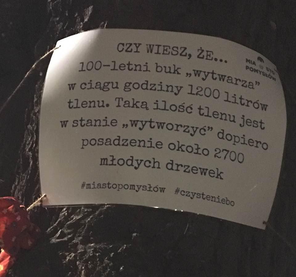 Funkcja Miasto. To nie jest miasto dla starych drzew, kwiecień 2017 r. - Fot. Jacek Poniedziałek.