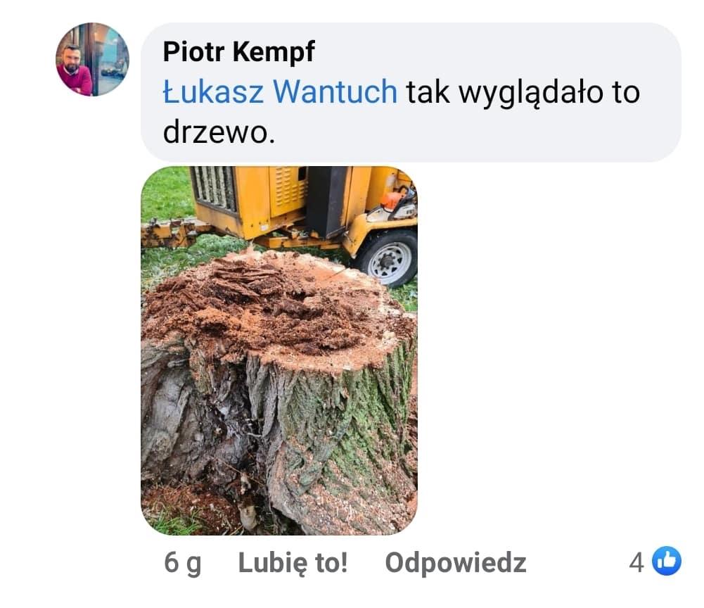 Dyrektor Zarządu Zieleni Miejskiej Piotr Kempf pokazuje mieszkańcom stan krakowskich drzew po 18 latach rządów Jacka Majchrowskiego.