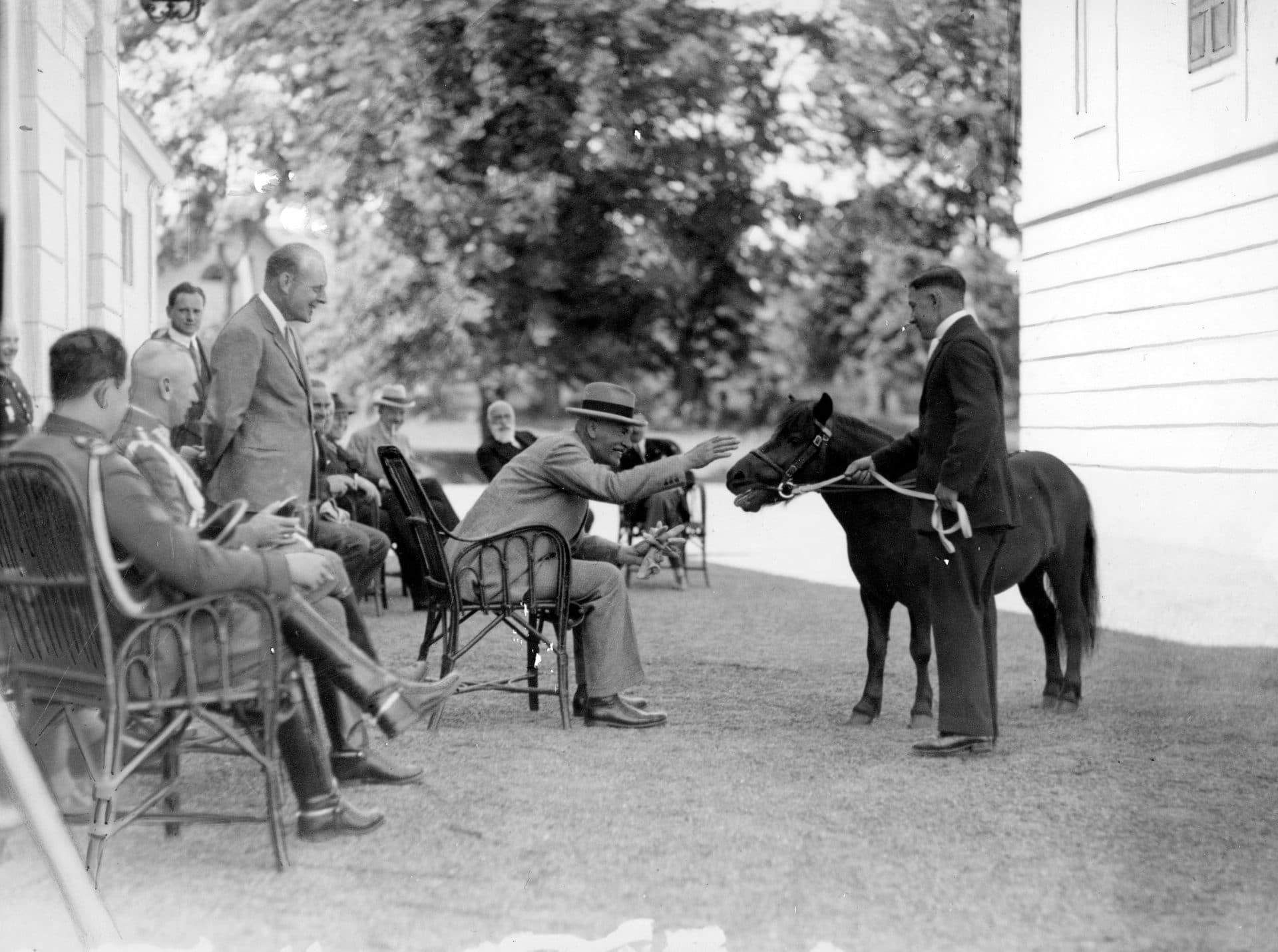 Prezydent RP Ignacy Mościcki ogląda konie w majątku ordynata Alfreda Potockiego. 1929 rok. Źródło: Narodowe Archiwum Cyfrowe.