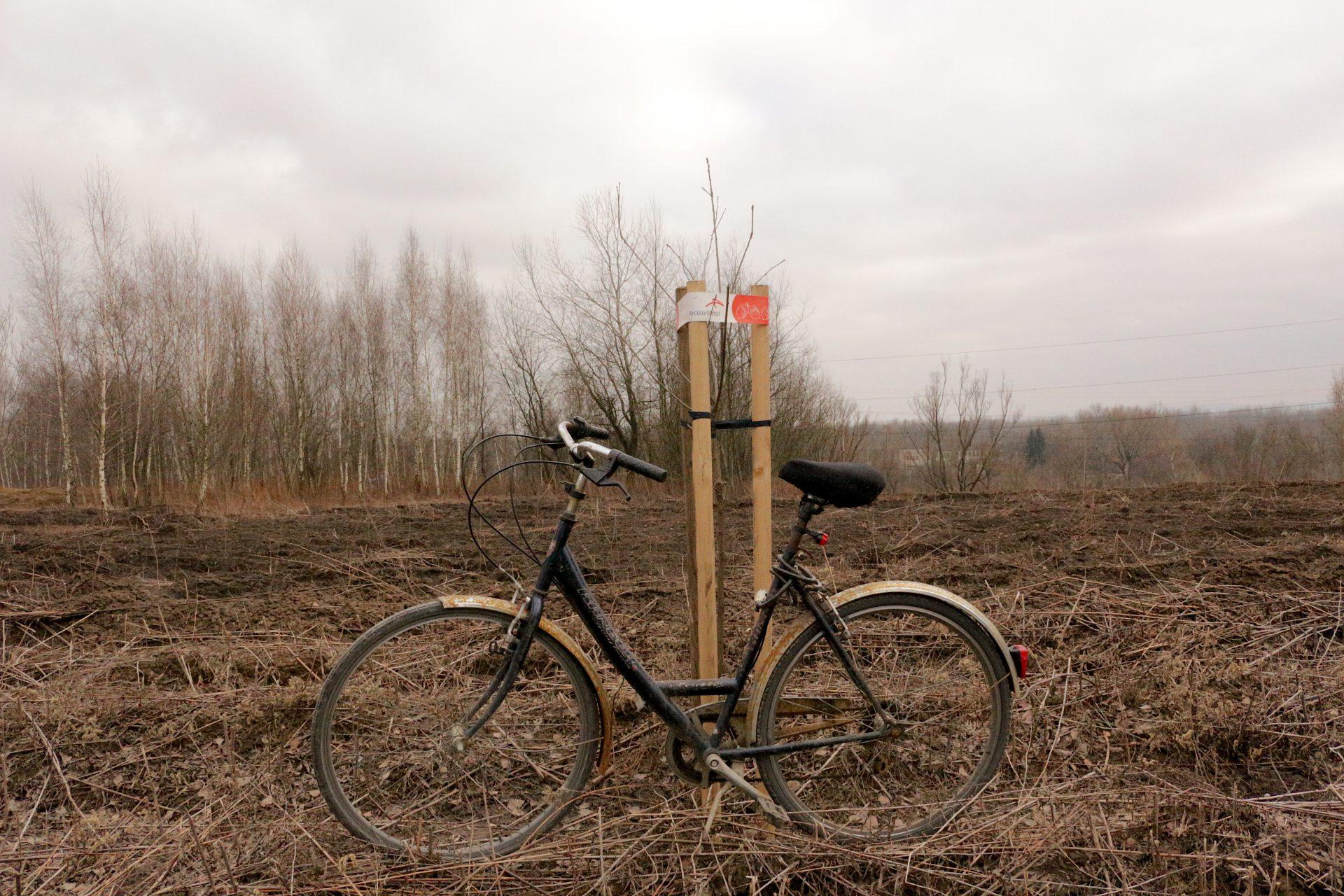 Nowa Huta zieleń drzewa