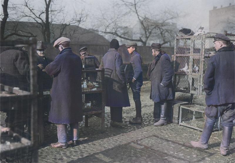 Klatki z gołębiami na sprzedaż przy nieparzystej stronie ul. Okopowej. W tle z prawej fragment kamienicy przy ul. Leszno 115 róg ul. Okopowej 9. Dwudziestolecie międzywojenne. Źródło: Narodowe Archiwum Cyfrowe.