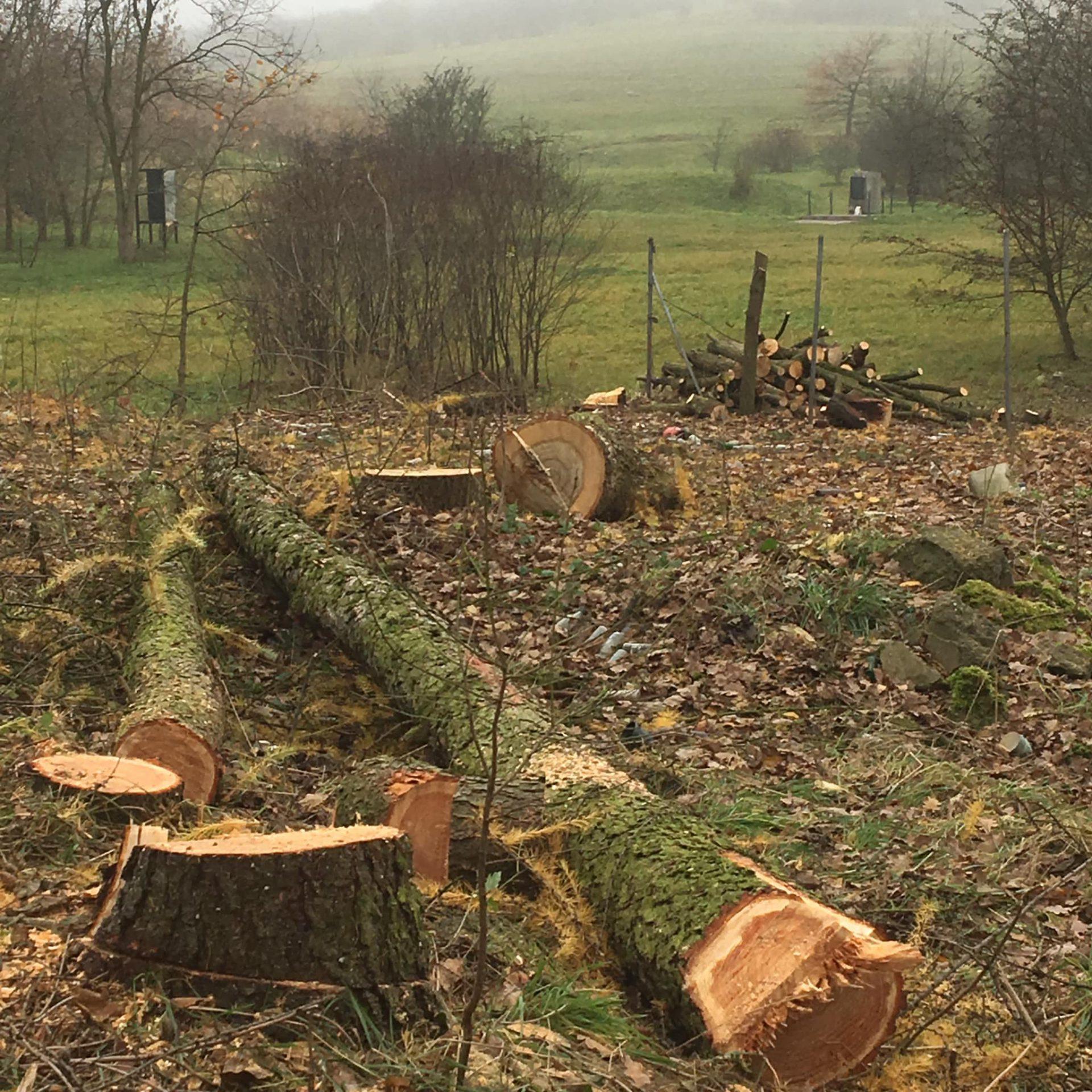Wycinka drzew na wspomnianej działce, do której doszło po zmianie planu. Fot. Stop Ogradzaniu Krzemionek.