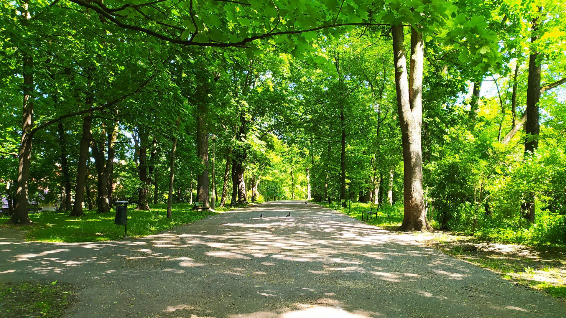 Park Bednarskiego w Krakowie.